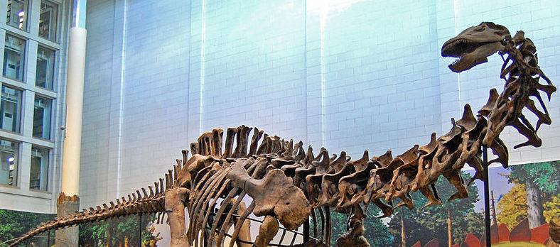 Mounted Apatosaurus at the Carnegie Museum (Tadek Kurpaski)