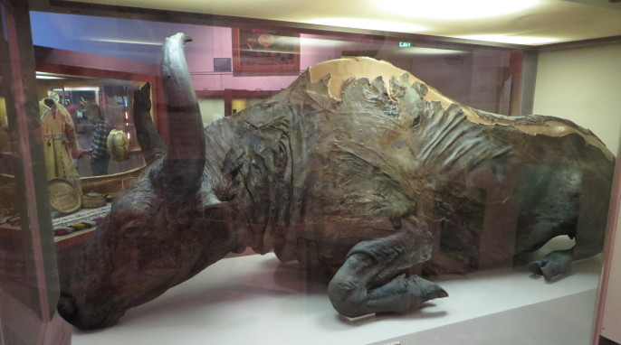 A Steppe bison on display at the University of Alaska Museum of the North (Bernt Rostad of Oslo, Norway)