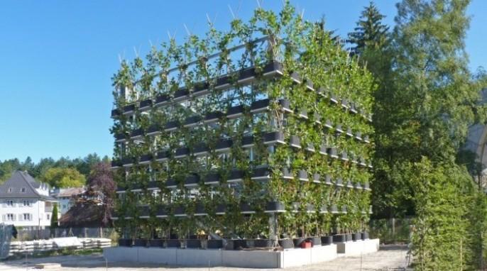 Arborsculpture: Nagold Cube (Copyright Ludwig.Schönle)