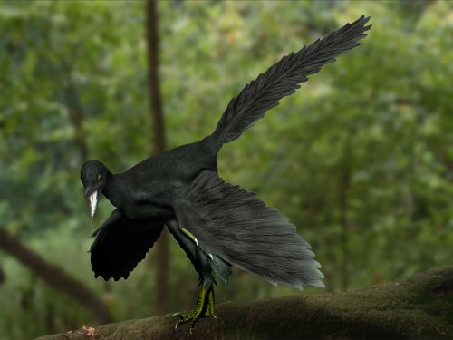 Archaeopteryx color