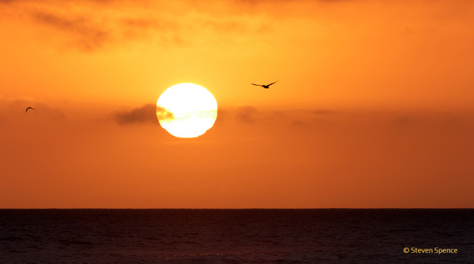 Overexposed for the sun (blown out), but good to capture the golden sky. Newport Beach, CA. U.S.A. [EOS 60D: 300mm, f7.1, ISO 125, 1/400 sec]