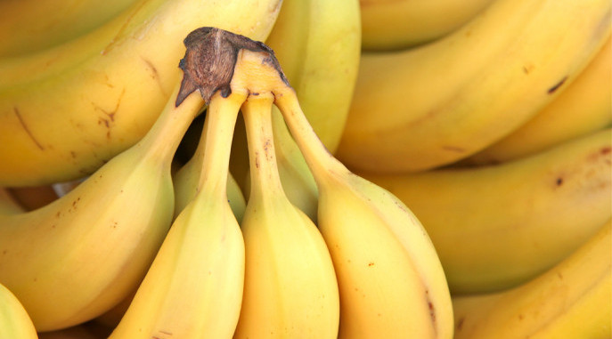 Bananas, Panama Disease
