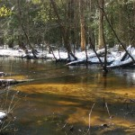 Antibiotic resistance: Tinker Creek is a pristine black water stream on the Savannah River Site. The bacteria in this stream are susceptible to antibiotics. Photo credit: Linda Lee/University of Georgia