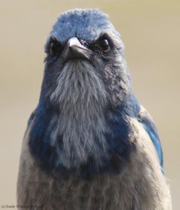 big beautiful bird brains