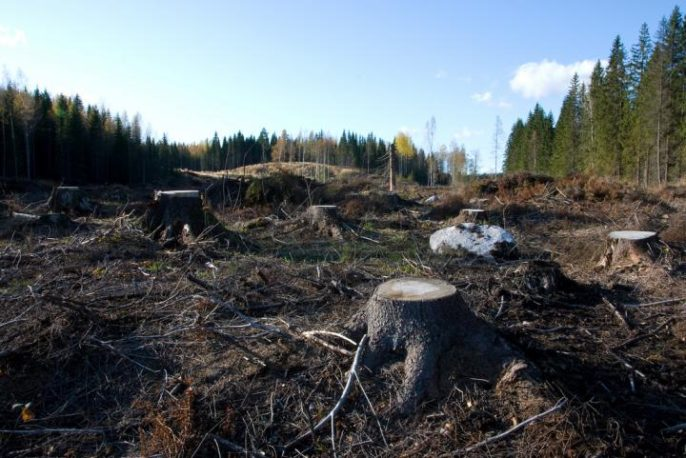 Soil Carbon Unstable After Clear-Cutting