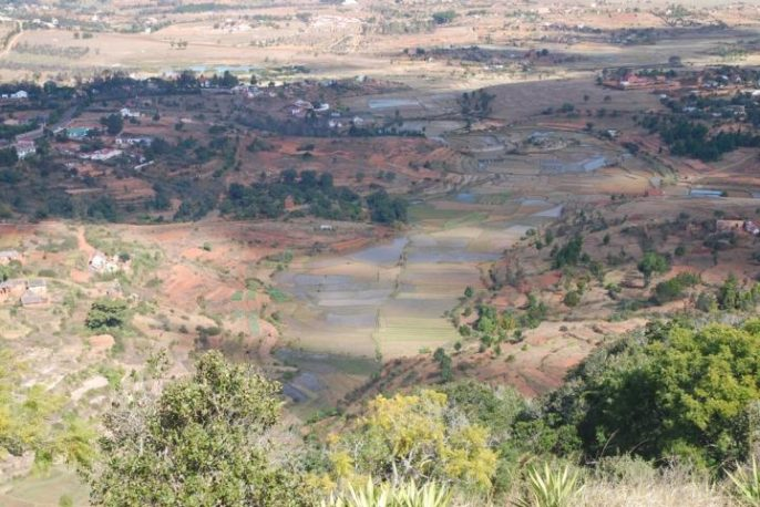 Even today, there are still many rice fields in the highlands of Madagascar. Settlers from Southeast Asia brought the grain to the island more than 1,000 years ago. Mark Horton/University of Bristol