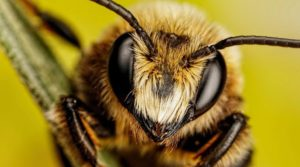 The Brainy Life of Bees