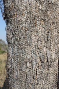 Wire Netting on Trees Reduces Impact by Elephants