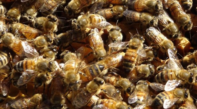Bee-coming a Beekeeper: An Interview with Andy Zaayenga