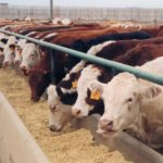 New Ways to Reduce Antibiotics in Food Animals by 2030.