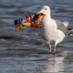 Plastic Pollution: An Emerging Threat Beneath Our Feet