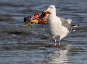 Plastic Pollution: An Emerging Threat Beneath Our Feet