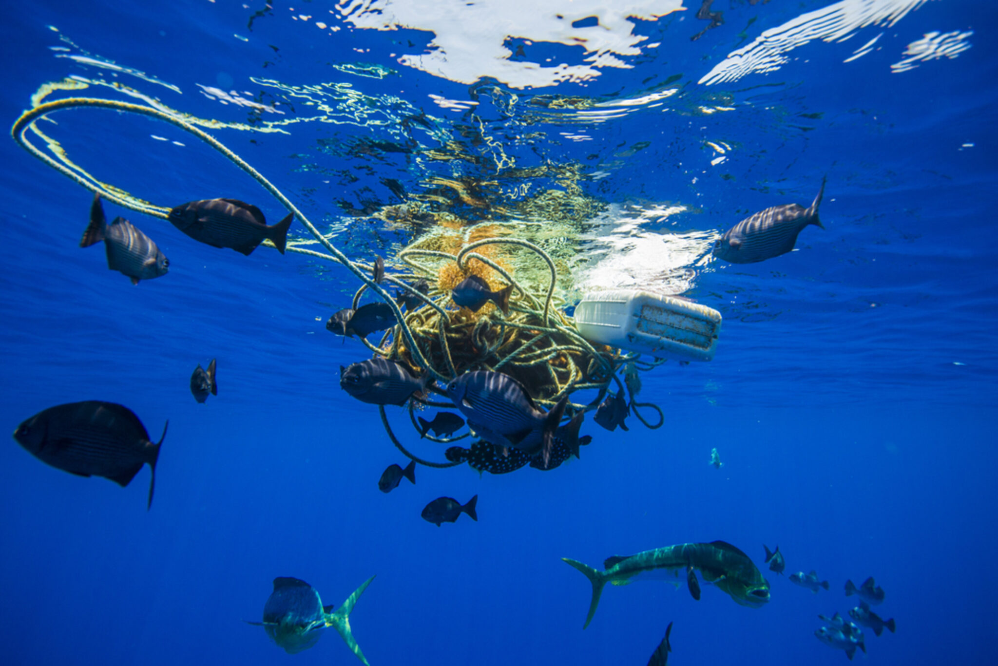 The US Needs a Federal Ban on Marine Plastic Pollution ...