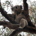 Australian Bushfires/Wildfires