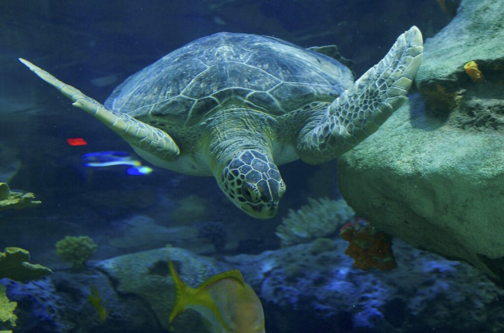 Sea turtles photographed by City.and.Color at Ripley's Aquarium of Canada (CC BY 2.0)