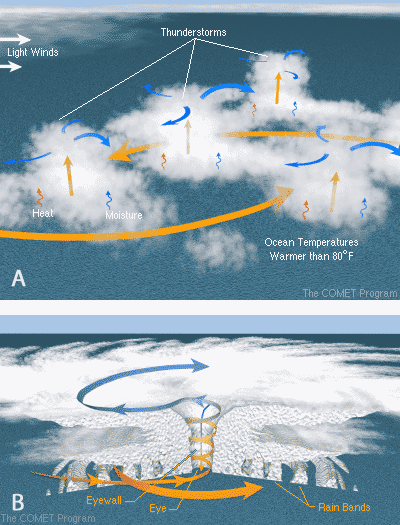 Thunderstorms, warm ocean water and light wind are needed for a hurricane to form (A). Once formed, a hurricane consists of huge rotating rain bands with a center of clear skies called the eye which is surrounded by the fast winds of the eyewall (B).Source: COMET/UCAR