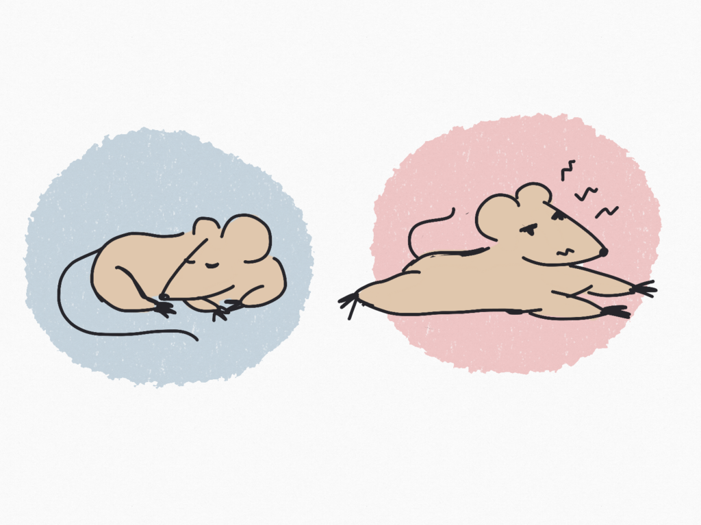 One group of rats experienced normal sleep, while the other group had their sleep time regularly interrupted.
